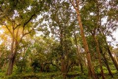 Région intermédiaire de forêt de soleil Images libres de droits