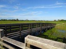Région naturelle de clairières de pin dans des marais de la Floride photos stock