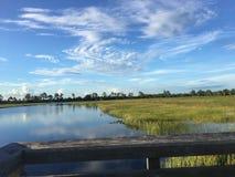 Région naturelle de clairières de pin dans des marais de la Floride photo stock