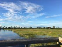 Région naturelle de clairières de pin dans des marais de la Floride image stock
