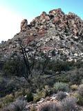 Région rouge de conservation de canyon de roche, Nevada, Etats-Unis Images stock