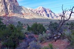 Région rouge de conservation de canyon de roche, Nevada, Etats-Unis Photo stock