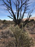 Région rouge de conservation de canyon de roche, Nevada, Etats-Unis Images libres de droits