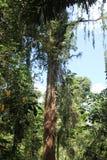 Région sauvage à Davao Photo libre de droits