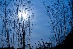 Région sauvage allumée par lune Photographie stock