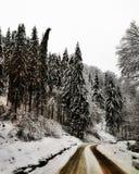 Région sauvage blanche roumaine images stock