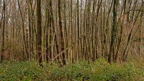 Région sauvage de forêt d'hiver dans la campagne flamande images stock