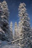 Région sauvage de l'hiver Image libre de droits
