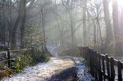Régions boisées d'hiver Photos stock