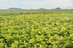 Régions boisées de Brachystegia en parc national de Kasungu Image libre de droits