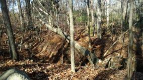Régions boisées de l'Ohio Photo libre de droits