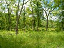 Régions boisées vertes d'été Photo stock