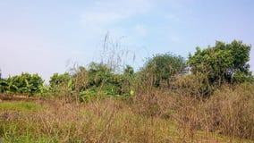 Régions de région sauvage Photos libres de droits
