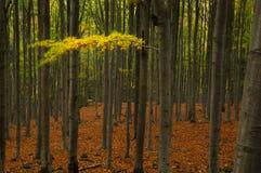Réminiscence d'automne Photographie stock libre de droits