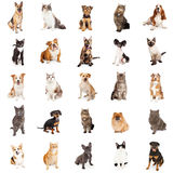 Répétition du modèle des chats et des chiens image libre de droits