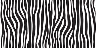 Répétition sans couture de jungle de rayure de texture de zèbre de vecteur de fond noir animal d'impression blanc illustration libre de droits