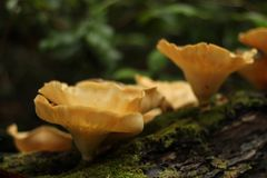 Répand le lichen Photos libres de droits