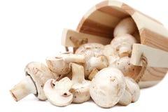 Répand les champignons de paris Photo libre de droits