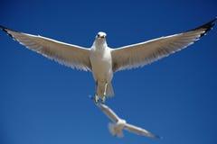 Répandez les ailes photos stock