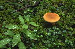 Répandez sur l'étage de forêt dans les Rocheuses canadiennes photo libre de droits