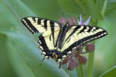 Répandez vos ailes Photo stock