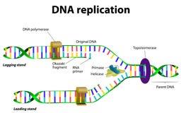Réplica de la DNA ilustración del vector