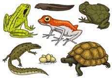Répteis e anfíbios ajustados Animal de estimação e animais tropicais Animais selvagens e rãs, lagarto e tartaruga, camaleão e anu ilustração royalty free
