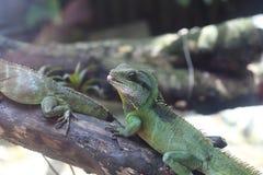 Répteis no jardim zoológico de Saigon e no jardim botânico Imagem de Stock