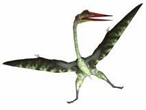 Réptil de Quetzalcoatlus no branco ilustração stock