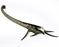 Réptil do Elasmosaurus no branco ilustração do vetor