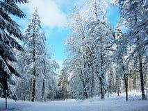 République-forêt tchèque en hiver près de Trutnov Photos stock