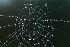 Réseau d'araignée Image libre de droits