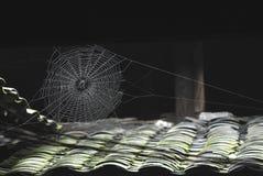 Réseau d'araignée Images stock