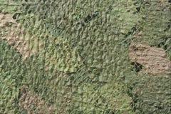 Réseau de camouflage Photo libre de droits