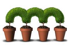 Réseau de croissance Photo libre de droits