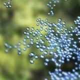 Réseau de molécule Photo libre de droits