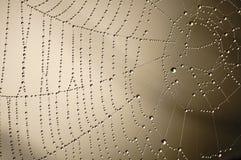 Réseau humide (1) Photos libres de droits