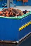 Réseaux sur un bateau de pêche Photographie stock libre de droits
