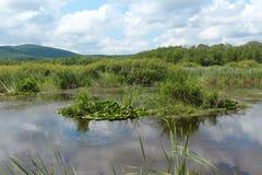 Réservation Arkutino - Bulgarie Photographie stock libre de droits