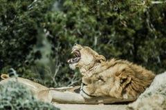 Réservation d'Africain de Sigean Images stock