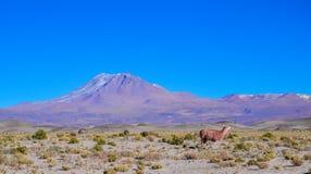 Réservation d'Eduardo Avaroa Andean Fauna National, Bolivie Photo libre de droits