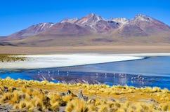 Réservation d'Eduardo Avaroa Andean Fauna National de flamant, Bolivie Photos stock