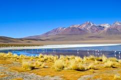 Réservation d'Eduardo Avaroa Andean Fauna National de flamants, Boliviaa Photo stock