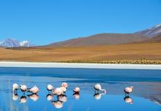 Réservation d'Eduardo Avaroa Andean Fauna National de flamants, Bolivie Images stock