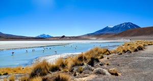 Réservation d'Eduardo Avaroa Andean Fauna National de flamants, Bolivie Images libres de droits