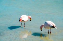 Réservation d'Eduardo Avaroa Andean Fauna National de flamants, Bolivie Photo stock