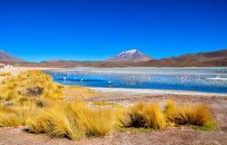 Réservation d'Eduardo Avaroa Andean Fauna National de flamants, Bolivie Image libre de droits