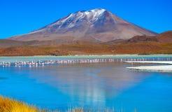 Réservation d'Eduardo Avaroa Andean Fauna National de flamants, Bolivie Photographie stock