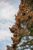 Réservation de biosphère de papillon de monarque, Michoacan (Mexique) images stock