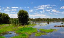 Réservation de marécage de Beelier, Australie occidentale Photo stock